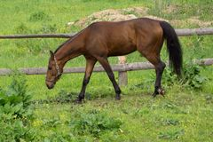 Beautiful horse in nature over the fence royalty free stock photography