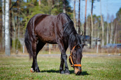 Beautiful horse outdoors Stock Photography