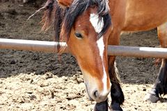 Beautiful horse in the paddock on a Sunny day royalty free stock images
