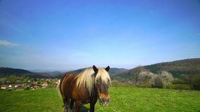 Beautiful horse on pasturage, sunny spring day. stock video