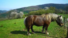 Beautiful horse on pasturage, sunny spring day. stock footage