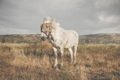 Beautiful horse in the pasture Royalty Free Stock Photo
