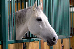 Beautiful horse portrait. Portrait of a beautiful horse Royalty Free Stock Photos