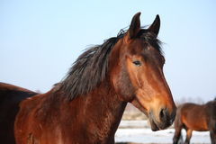 Beautiful horse portrait in early spring Royalty Free Stock Photos