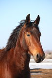 Beautiful horse portrait in early spring Stock Photo