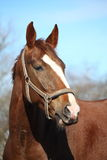 Beautiful horse portrait in early spring Royalty Free Stock Images