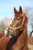 Beautiful horse portrait in early spring Royalty Free Stock Photo