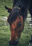 Horse portrait in the country royalty free stock image