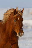 Beautiful horse portrait Royalty Free Stock Photography