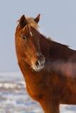 Beautiful horse portrait Stock Images