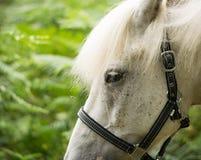 Beautiful Horse Posing for Camera Stock Photography