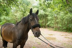 Beautiful Horse Posing for Camera Royalty Free Stock Images
