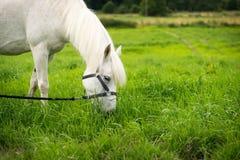 Beautiful Horse Posing for Camera Stock Photo