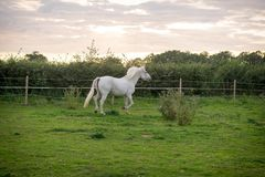 Beautiful Horse Posing for Camera Stock Photos