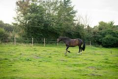 Beautiful Horse Posing for Camera Stock Image