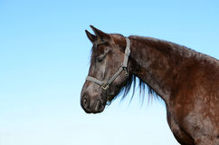 Beautiful horse profile portrait Royalty Free Stock Photo