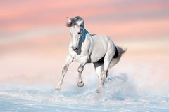 White horse in snow stock photography