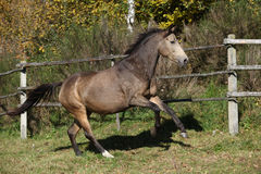 Beautiful horse running on pasturage in autumn Royalty Free Stock Photo