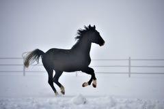 Beautiful horse running Royalty Free Stock Photo