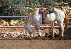 Beautiful horse with a saddle Stock Photos