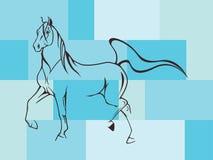 Beautiful horse Stock Photos