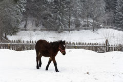 Beautiful horse in the snow Stock Photo