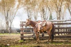 Beautiful horse Royalty Free Stock Photos