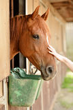 Beautiful horse in a stable. Beautiful horses in a stable Royalty Free Stock Image
