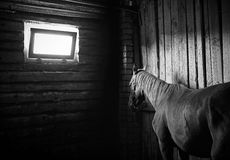 Beautiful horse. In the stables Stock Image
