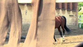 Beautiful horse stock video footage