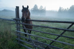 Beautiful horse is standing in foggy paddock Royalty Free Stock Images