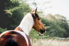 Beautiful horse stands on a background of greenery royalty free stock image