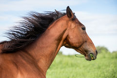 Beautiful horse at summer day Royalty Free Stock Images
