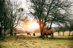 Horse on the sunny  pasture Stock Images