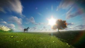 Beautiful horse and tree of life against timelapse clouds stock video