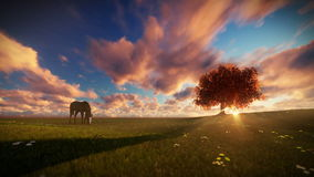 Beautiful horse and tree of life at sunset, travelling shot. Hd video stock video footage