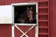 Beautiful horse waiting near open barn door Royalty Free Stock Images