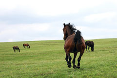 Beautiful horses stock photos