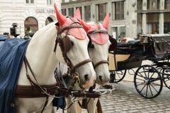 Beautiful horses Royalty Free Stock Photos