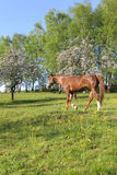 Beautiful Horses. In the grass field Stock Photography