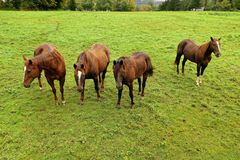 Beautiful horses from an aerial view stock image