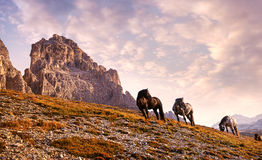 Beautiful horses in the Dolomites Royalty Free Stock Photography