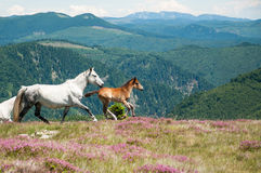 Beautiful horses in idyllic mountain scenery Stock Photo