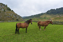 Beautiful horses on a meadow. Wild Stock Photo