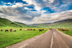 Beautiful horses in mountain ranch, Italy Stock Photo