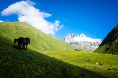 Horses in the beautiful mountain valley Royalty Free Stock Photo