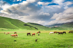 Beautiful horses in mountain valley, Umbria Royalty Free Stock Photo