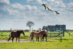 Beautiful Horses in Paddock Stock Images