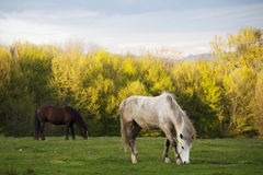 Beautiful horses in a park Stock Image