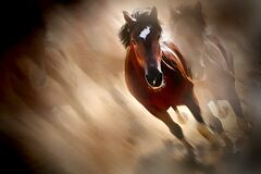 Beautiful Horses Running Stock Image